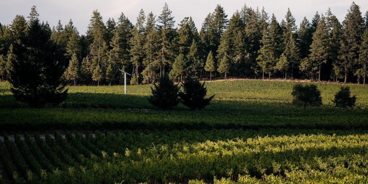 La Jota Vineyard Co. Vineyard Image